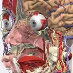 La simulación en la enseñanza de la Ingeniería Biomédica