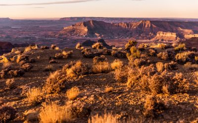 Episode 14 – Science on the range: studying wide open landscapes in the American West