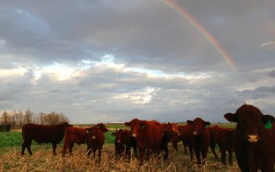 Episode 31 – Restoring Texas prairie land: From big ag to a prosperous family farm