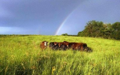 Episode 65 – Health, profit, and beauty on the farm in Minnesota