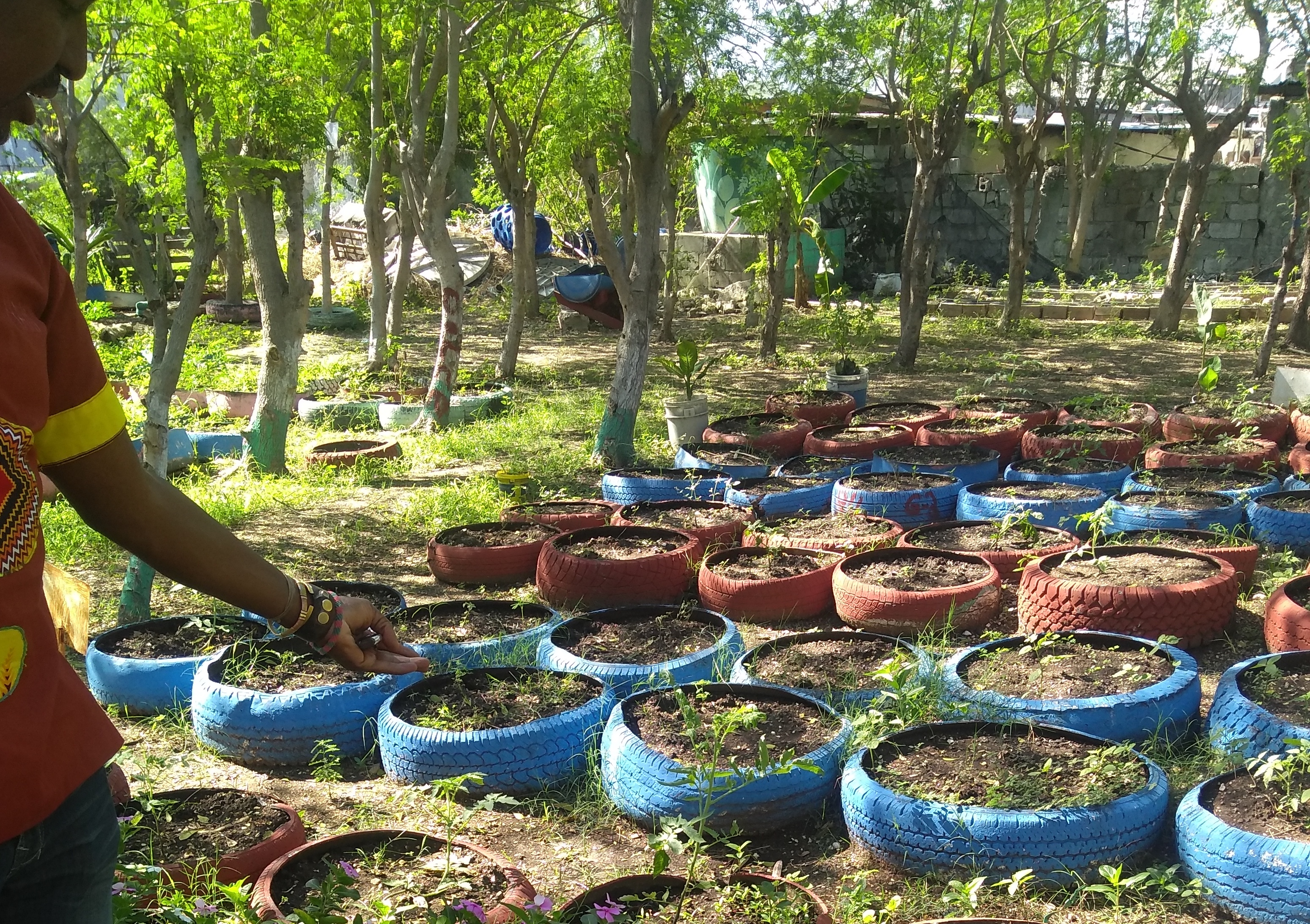 Program Update: Haiti Reborn