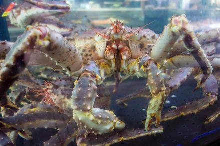 Giant Crab at Bergen Fish Market