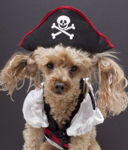 Quiz Hacker Test Prep - Little Pirate Dog