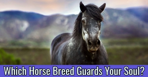 realistic horse breeds # 67