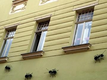 formigas gigantes andando na parede de uma casa