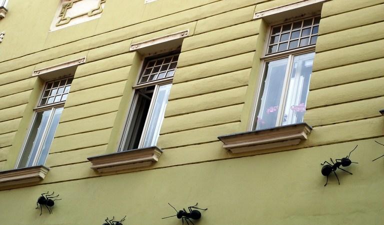 Formigas Em Casas Significado Espiritual