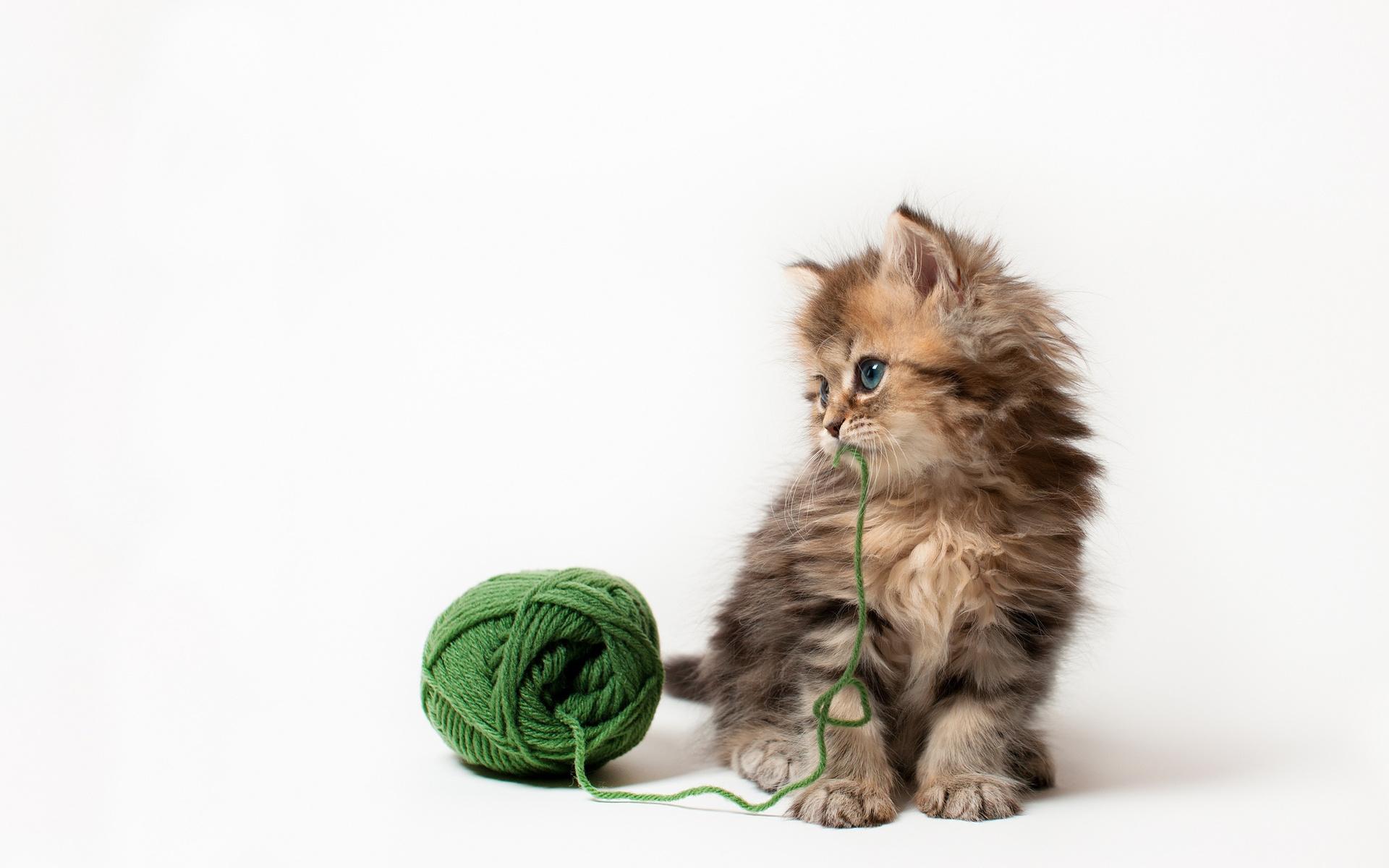 Поможем выбрать имя кошке научный подход к проблеме