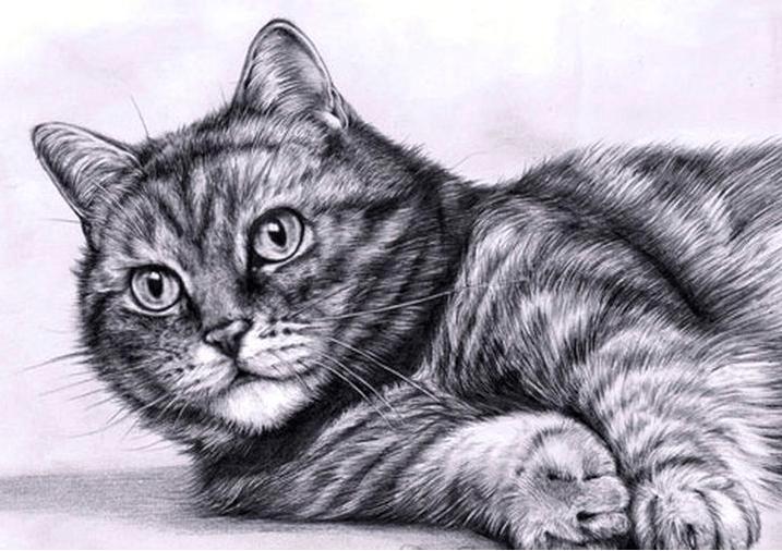 Красивые картинки нарисованные кошек