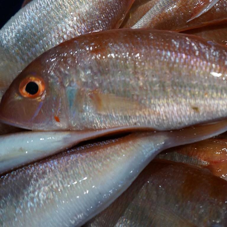 Cá Hường tươi sống