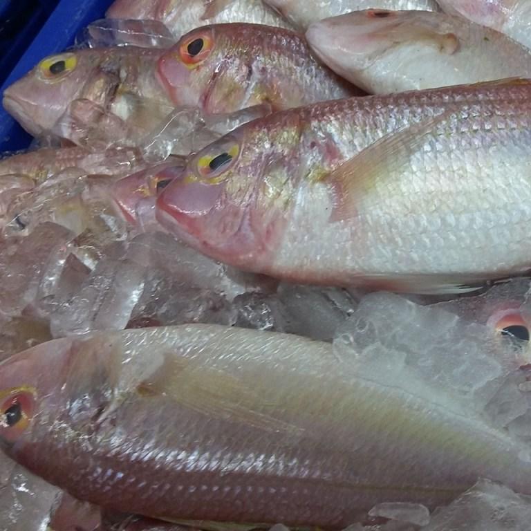Cá đổng tươi để trên đá lạnh