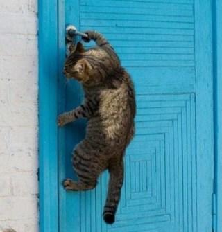 кот, закрытая дверь