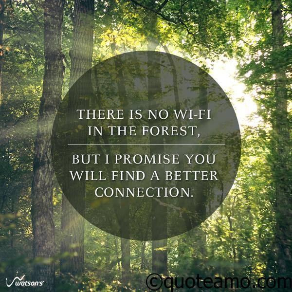 Forest Quotes Interesting There Is No Wifi In The Forest Quote Amo