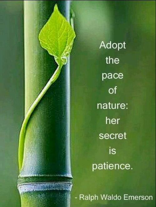 patience love quotes images