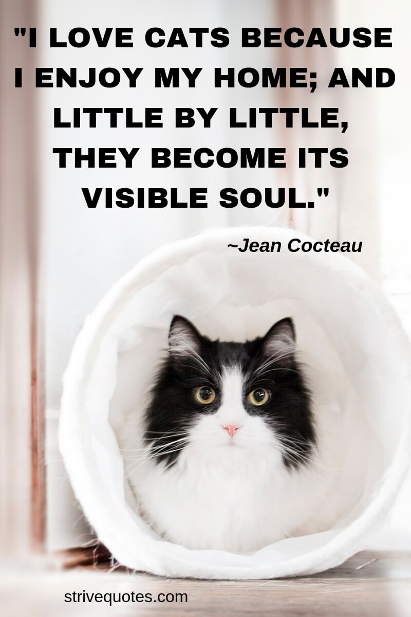 100+ Funny & Inspirational Pet Quotes and Sayings