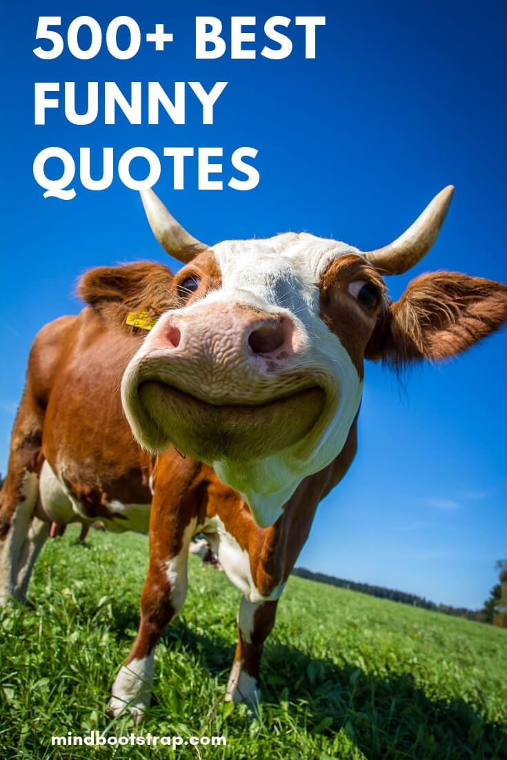 The 513 Best Funny Quotes With Beautiful Pictures To Share With Your Friends