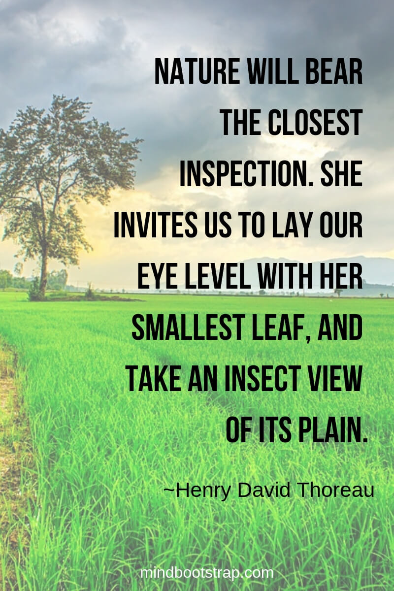 Henry David Thoreau Quotes About Nature | Nature will bear the closest inspection. She invites us to lay our eye level with her smallest leaf, and take an insect view of its plain. -Henry David Thoreau