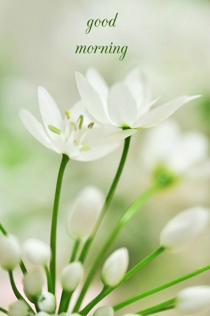 Good Night Quotes Good Morning Card White Flowers