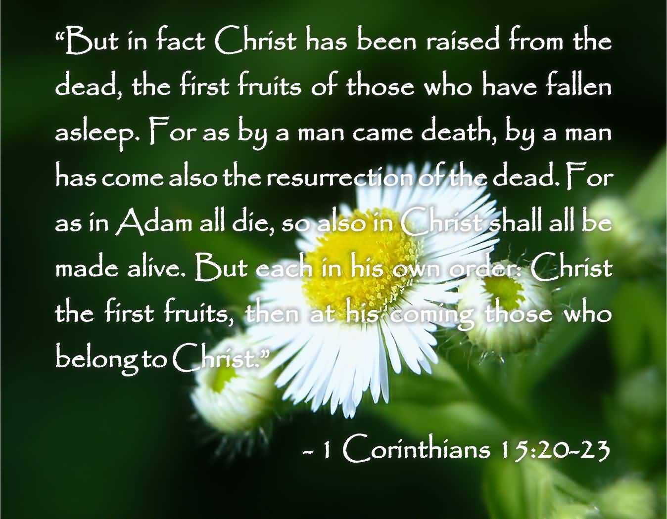 Bible Quotes About Death Of A Loved One Bible Quotes About Losing A Loved One 02  Quotesbae