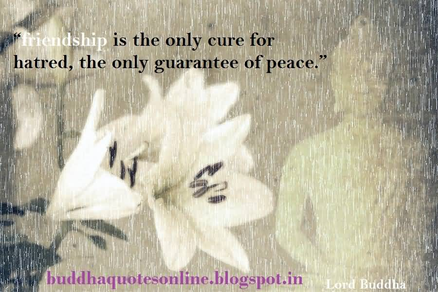 Buddha Quotes About Friendship Amusing Buddha Quotes About Friendship 17  Quotesbae