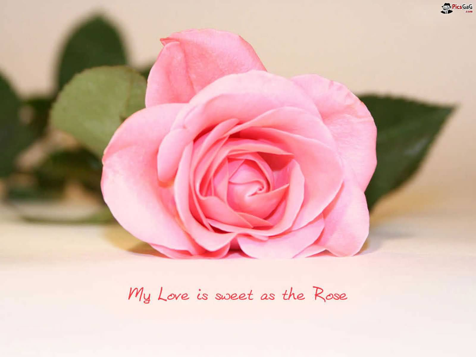 Love Flower Quotes Adorable Flower Love Quotes 12  Quotesbae