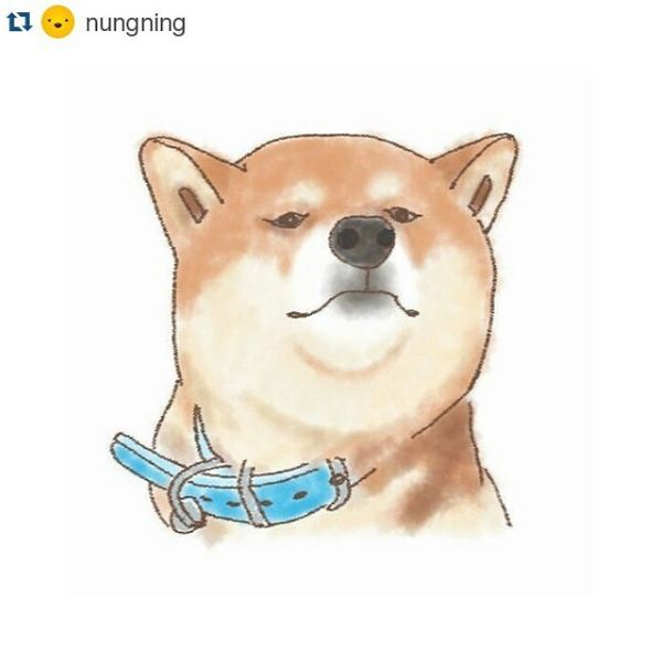 Funny Cartoon Doge Picture