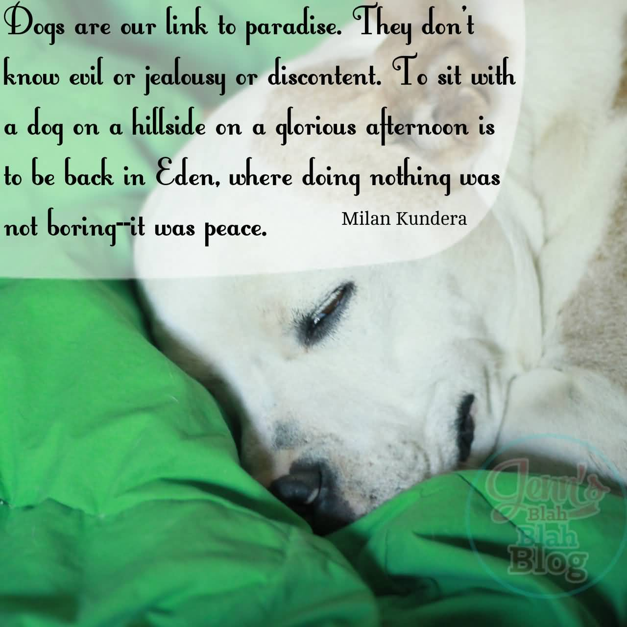 I Love My Dog Quotes I Love My Dog Quotes 08  Quotesbae