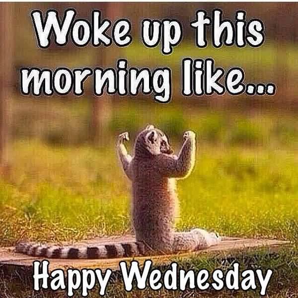 happy wednesday meme images