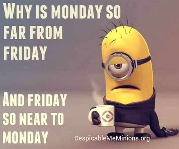 43 Funny Monday Meme That Make You Laugh