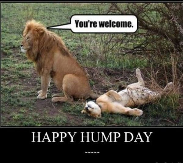 Funny happy hump day meme pictures