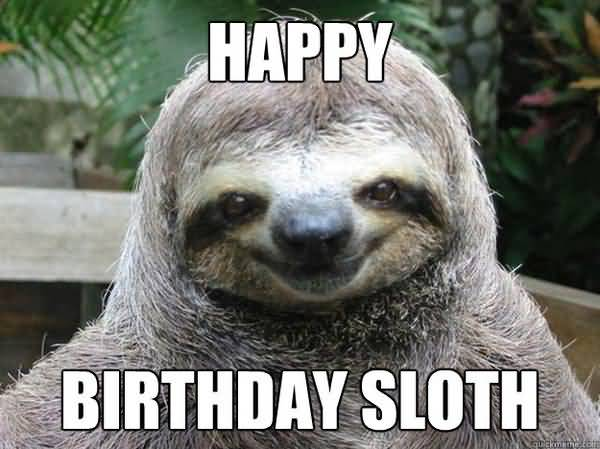 Funniest birthday sloth meme picture