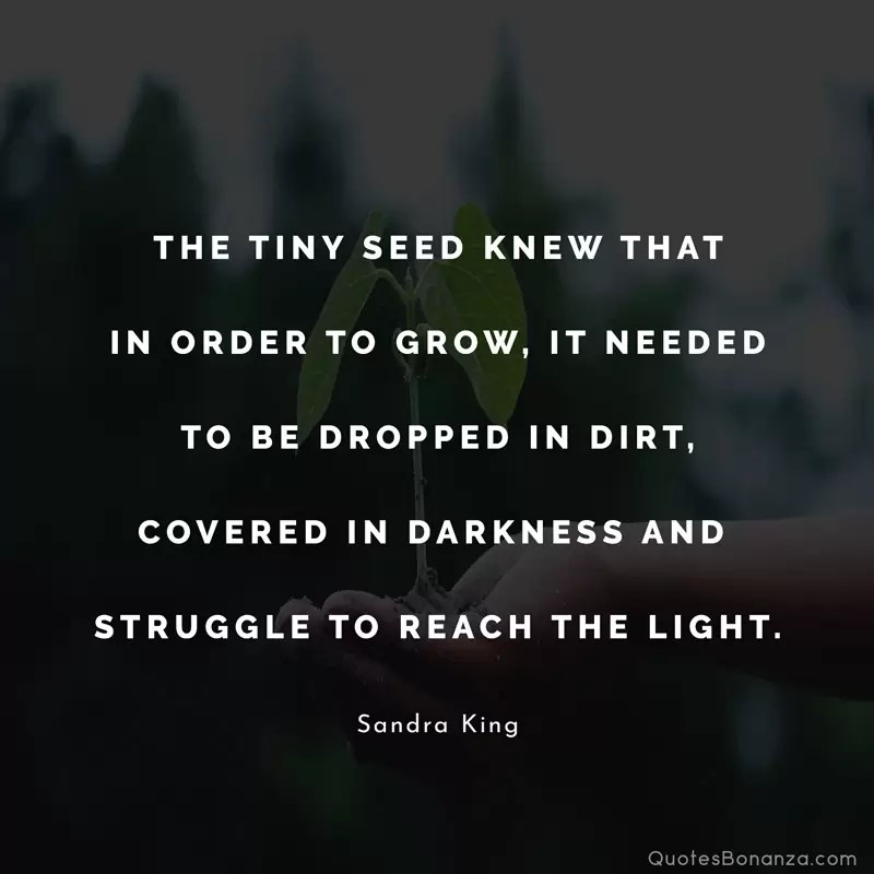 The tiny seed knew that in order to grow, It needed to be dropped in dirt, covered in darkness and struggle to reach the light. Sandra King