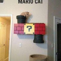 Top 40 Funny Cat Memes