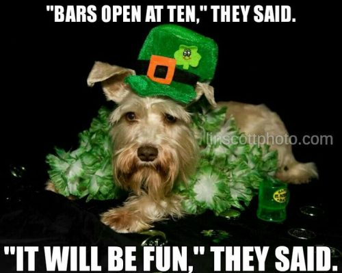 23 Hilarious 2018 St Patricks Day Memes That Will Bring