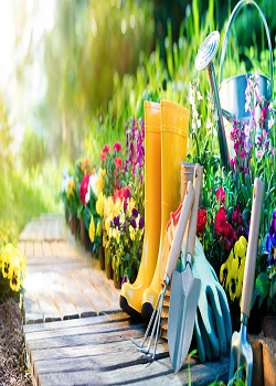 Organic Solidarity: Things You Must Know When It Comes To Organic Gardening_Image Source Google