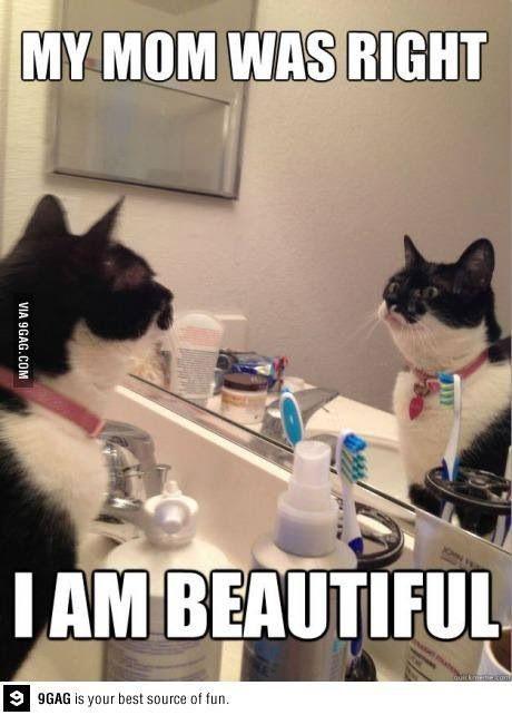 Top 30 Funny Cat Memes #Funnies