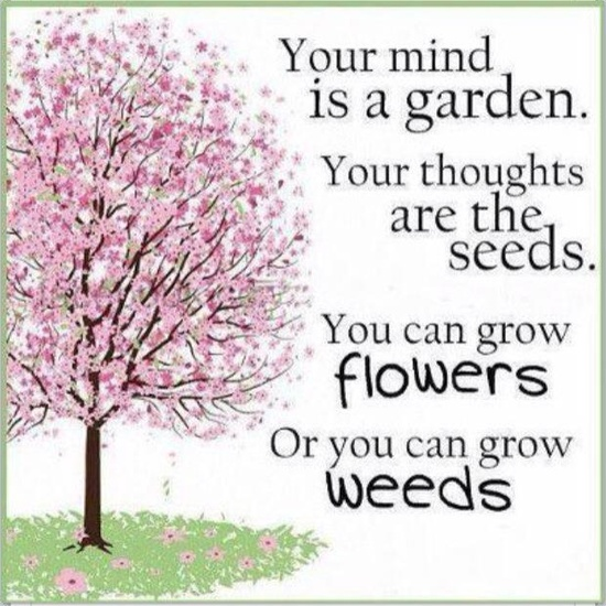 Your Mind Is a Garden.Your Thoughts Are The Seeds.You Can Grow Flowers Or You Can Grow Weeds ~ Life Quote