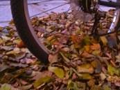 Bike swallowed up in leaves