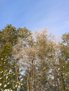 Hilltop, treetops, and blue sky