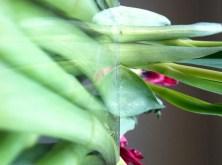 Tulip Four