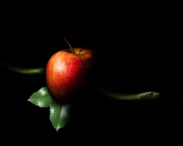 Forbidden fruit: Adam