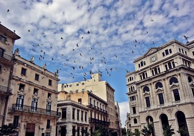 Bestias en La Habana Vieja
