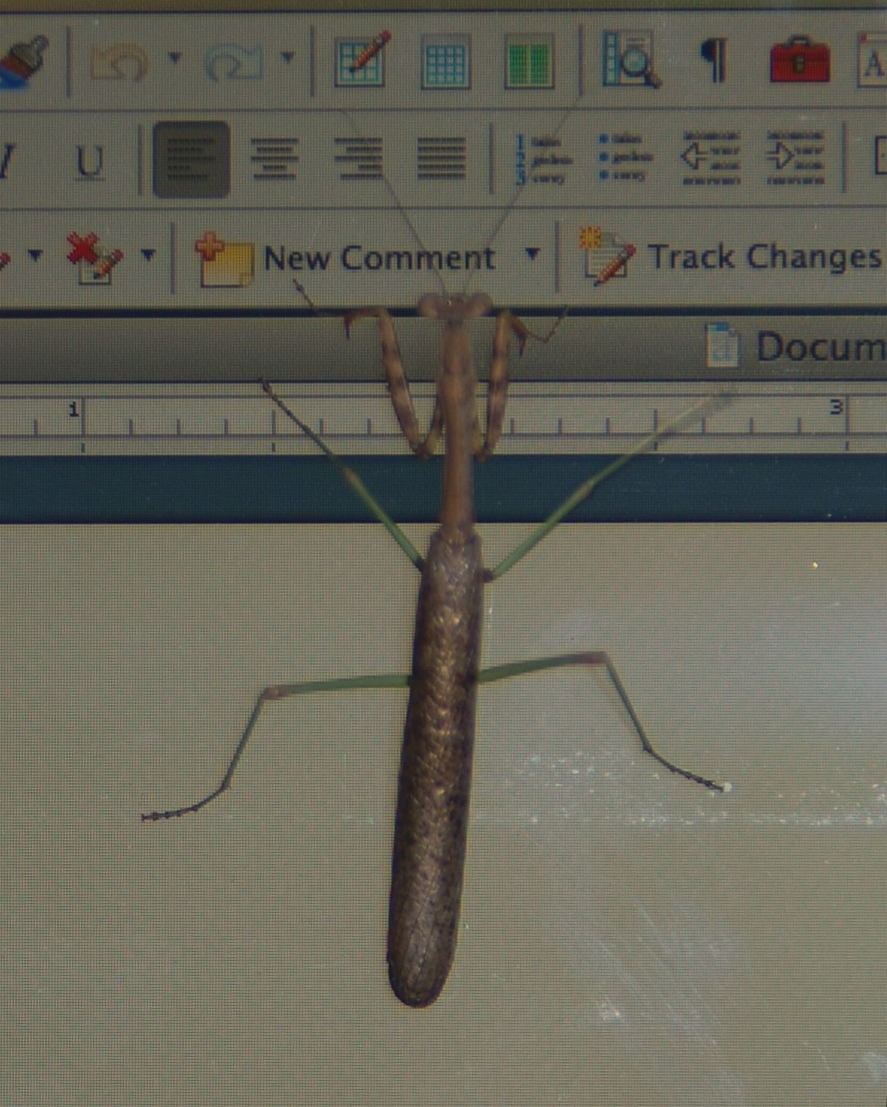 """Praying mantis on a Macbook screen, tapping on the """"New Comment"""" button of a Word program toolbar."""