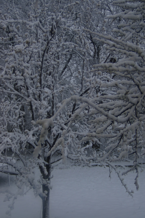 Cold grey day with snow covering tree branches and ground