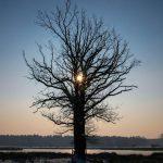 tree-538274_960_720