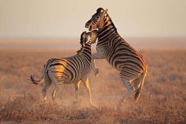 Wild Animal Safari | Wild Animal Safari | Animal Planet