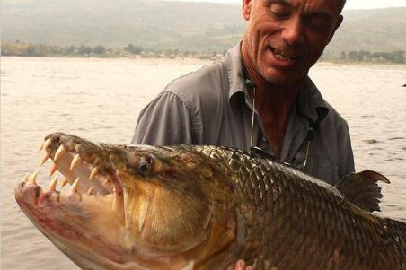 A sport fisherman holding a goliath tigerfish in his arms, showing its toothy maw.
