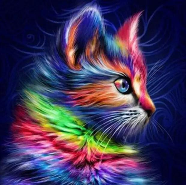 Кошки — природные эмпаты, исцеляющие ваши разум, тело и душу