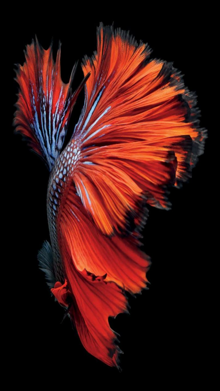 Ios9 Red Fish Artwork Pattern Dark Iphone 8 Wallpaper