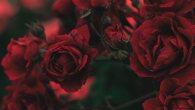 Permalink to Flower Iphone Wallpaper