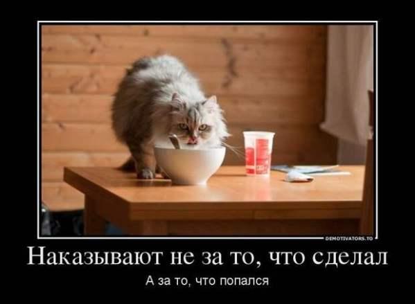 Смешные картинки про котов! - Усатый-полосатый ...